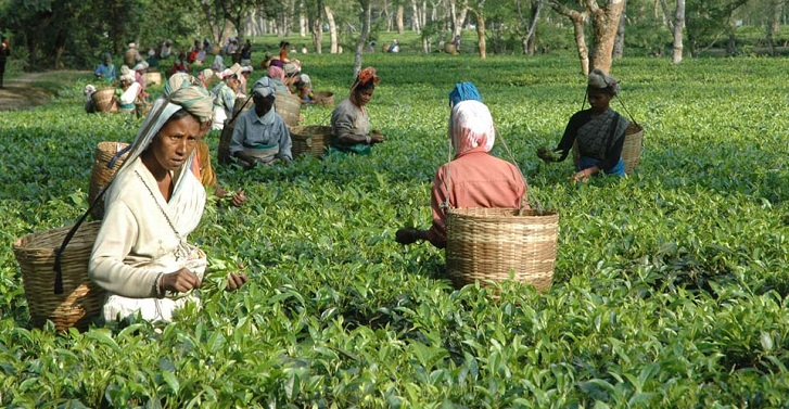 All dues of tea-workers must be cleared